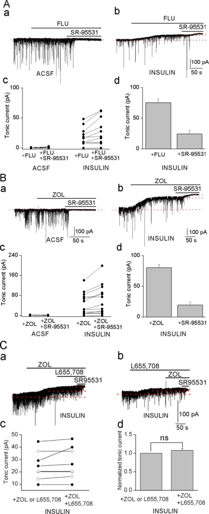 Inhibition of insulin (1 nM) induced tonic current by flumazenil and zolpidem.Effects of flumazenil (A, 1 µM), zolpidem (B, 100 nM) and SR-95531 (20 µM) on the currents in an ACSF (a) and an insulin treated neuron (b). c, Amplitudes of tonic currents in individual neurons; A: ACSF (n = 8), insulin incubated (n = 10); B: ACSF (n = 6), insulin-incubated neurons (n = 13). d, A & B, % of total tonic current inhibited by antagonists. C. Tonic currents (a, b) in the presence of L655, 708 (5 µM) or zolpidem (100 nM) or the drugs together (L655, 708,5 µM; zolpidem, 100 nM) in insulin treated neurons. c. Amplitudes of the tonic currents in individual neurons (L655, 708 first applied alone: open circle, n = 4; zolpidem first applied alone: filled circle, n = 4). d. Tonic current inhibited by L655, 708 plus zolpidem (n = 8) normalized to the tonic current inhibited by either L655, 708 or zolpidem in the same cell. ns, no significance.