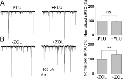 sIPSCs recordings in insulin-incubated neurons recorded before (−) and after (+) application of (A) flumazenil (1µM), (B) zolpidem (200 nM) and total sIPSCs normalized to before flumazenil or zolpidem application, mean ± SEM, n = 6.** P<0.01.