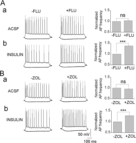 Flumazenil and zolpidem increase the excitability of insulin-treated CA1 pyramidal neurons by inhibiting tonic GABAA channels.Current-clamp traces illustrate action potential (AP) firing evoked by a 100 pA current step (500 ms) in ACSF (a) and insulin-incubated neuron (b) before and after application of flumazenil (A, 1 µM) or zolpidem (B, 100 nM). Bar graphs; ACSF (FLU: n = 4; ZOL: n = 4), insulin incubated neurons (FLU: n = 6; ZOL: n = 7). **, P<0.001.