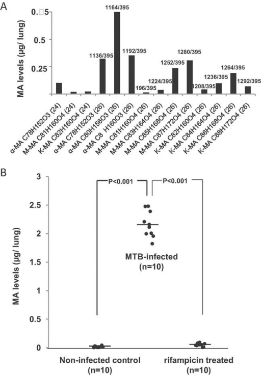 MAs in lung tissue are a diagnostic marker for TB infection in miceMAs were extracted from homogenized lungs of MTB-infected mice, spiked with synthetic C32 MA standard and the most abundant mycobacterial MA species were quantified using MRM.Levels of individual MA molecular species in the lung of one infected, untreated mouse 5 weeks post-infection.MA levels of non-infected control mice compared to MTB-infected and to rifampicin-treated mice. The average bacillary load in this infections was 15.2 million CFU/lung (n = 5).