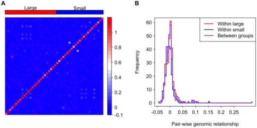 Genomic relationship among and between the large and small genome groups.(A) A heat map depicting the genomic relationship between DGRP lines. Genome size is ordered decreasingly from left to right and bottom to top. The strains in the groups are indicated as the red and blue rectangles on the top of the heat map. (B) Histograms showing genomic relationships within and between the genome size groups.