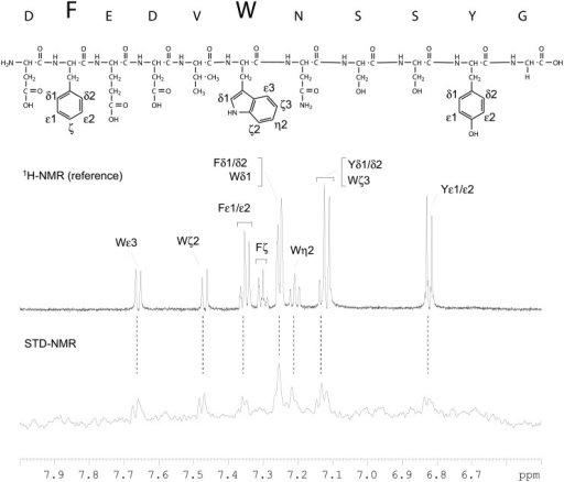 STD-NMR analysis of the Fab-binding epitope.The STD NMR (bottom) and reference 1H NMR spectra of the peptide DFEDVWNSSYG (diagram) in the presence of Fab were acquired at 600 MHz and 25°C for samples (160μl, in a 3 mm tube) prepared in PBS made with 2H2O, pH 7.5. The protein was irradiated at δH 9.5 ppm (on-resonance) and δH30 ppm (off-resonance) with a saturation time of 2 s. The excitation sculpting pulse sequence was used to suppress water signals. The oversized one-letter amino acid codes indicate the proton resonances that were enhanced in the STD experiments. The Greek letters and numbers designate the enhanced resonances of the aromatic systems. The unresolved resonances are grouped.