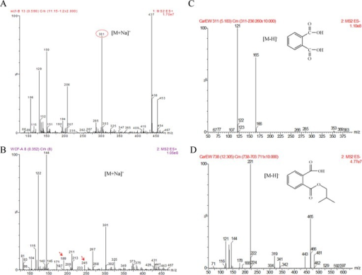 ESI-MS analysis of products identified in the CarEW catalyzed reaction.(A) and (B) The full ion scan of DiBP degradation after incubation with CarEW and the control without CarEW. m/z 301, DiBP; DiBP incubation with CarEW. m/z 189, PTH; m/z 245, MiBP. (A) and (B) were both tested under the positive mode ([M+Na]+). (C) and (D) Daughter ion scan for metabolites derived from the biodegradation of DiBP. (C) m/z 121, phthalate acid (PTH); (D) m/z 221, monoisobutyl phthalate (MiBP). Both were tested under negative mode ([M-H]−).