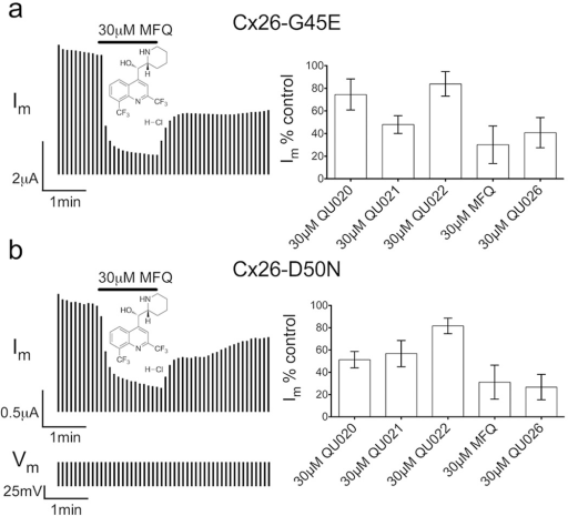 Mefloquine (MFQ) and quinine derivatives (QUO) suppressed (a) Cx26-G45E and (b) -D50N hemichannel currents in Xenopus oocytesSingle cells held at −40mV were repeatedly pulsed with +50mV depolarizations (Vm) and membrane current (Im) was measured. Cells were exposed to 30µM inhibitor for 90sec by switching perfusion solutions after lmin (left, shown for mefloquine). Inhibitors were washed out for 2.5min, showing partial reversibility at the concentration tested. Summary data for inhibitors QU020, QU021, QU022, MFQ, and QU026 are shown as the mean residual instantaneous membrane current during 30µM drug application as a percentage of the pre-drug value (right). MFQ and QU026 produced the greatest inhibition of Cx26-G45E and -D50N membrane currents. Data are the means ± SD.