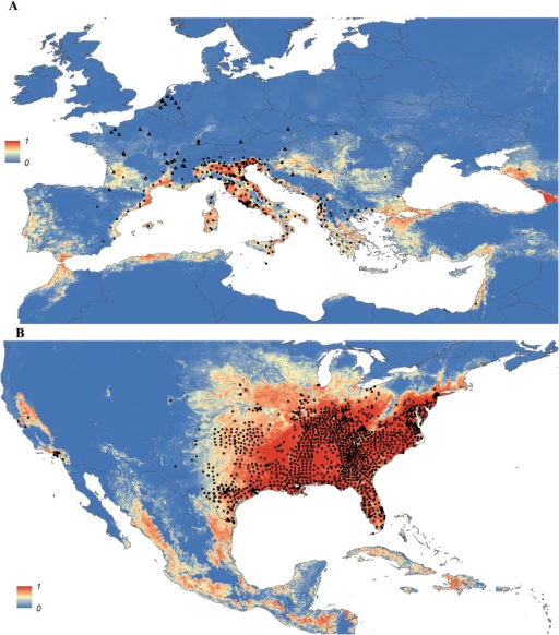 Predicted probability of occurrence of Ae. albopictus in Europe (A) and the United States (B), regions in which Ae. albopictus is rapidly expanding its range.Points represent known occurrences (transient [triangles] or established [circles]) until the end of 2013.DOI:http://dx.doi.org/10.7554/eLife.08347.010