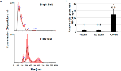siGlo incorporation and MP secretion following SW treatment.(a) Size distribution of MPs in bright field and FITC channel showing siGlo incorporation. Graphs represent the average numbers of MPs of each size. Red error bars indicate ± 1 standard error of the mean. (b) Relative siGlo uptake as demonstrated by the ratio of FITC:bright field particles. All experiments were performed in triplicate. *p < 0.05 versus the control group (no SW treatment). Error bars represent SD.