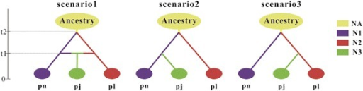 "Scenarios that were tested for the origin of P. × jrtyschensis (pj), P. nigra (pn) and P. laurifolia (pl). N1, N2 and N3 represent current effective population sizes of P. nigra, P. laurifolia and P. × jrtyschensis, respectively. For Scenarios 1–3, t1 is the time of origin of P. × jrtyschensis. t2 represents divergence time between P. nigra and P. laurifolia in ""generations ago"" and NA is the effective population size of the common ancestor of the three species"
