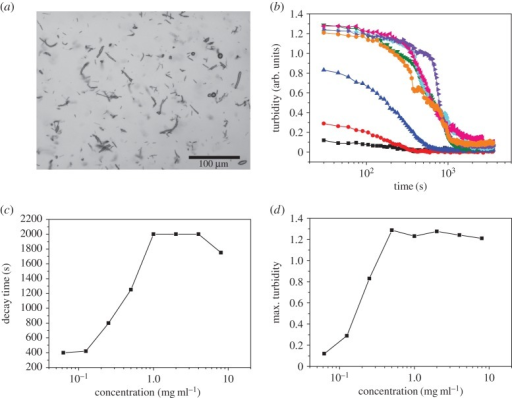 (a) Image taken of a sample shows the stabilization of air bubbles in a 1 mg ml−1 BslA solution. Irregularly shaped and elongated air bubbles are the predominant morphology. (b) Turbidity as a function of bulk BslA concentration. Black squares (0.0625 mg ml−1), red circles (0.125 mg ml−1), blue upside triangles (0.25 mg ml−1), green downside triangles (0.5 mg ml−1), cyan diamonds (1 mg ml−1), pink left triangles (2 mg ml−1), purple right triangles (4 mg ml−1) and orange octagon (8 mg ml−1). (c) The decay time (the time at which the decay curves in (b) reach a baseline turbidity) shows a concentration dependence up to 1 mg ml−1. Above this concentration, the decay times become constant. (d) A similar trend is observed for the value of maximum turbidity.
