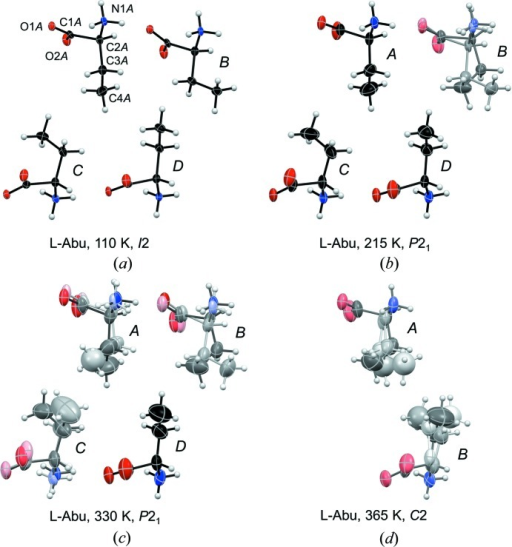 Molecular structures of l-Abu at (a) 110 (Görbitz, 2010 ▸), (b) 215, (c) 330 and (d) 365 K. Individual molecules in the asymmetric unit are labelled in italics (A, B, …) with illustrative atomic numbering given for one molecule. Thermal displacement ellipsoids are shown at the 50% probability level. Atom color depths reflect the occupancy of each conformation as listed in Table 5 ▸. The asymmetric unit of the P21 form of l-Abu at 110 K looks exactly as the I2 asymmetric unit shown in (a).
