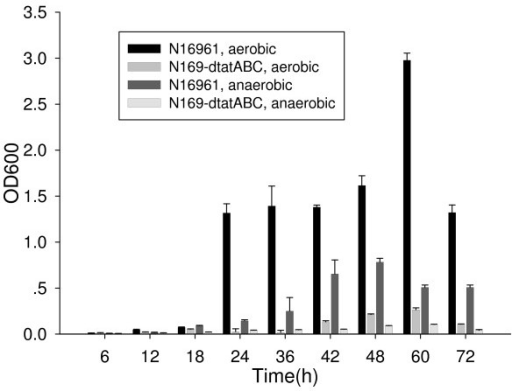 Comparison of biofilm formation by strains N16961 and N169-dtatABC cultured under aerobic and anaerobic conditions. For each strain (N16961 and n169-dtatABC), under each condition (aerobic and anaerobic), and at each time point, 7 wells were measured for repeat in one test. And the tests were repeated for three times. T-test was used for the comparison of strains N16961 and N169-dtatABC at each time point and under each condition. P values are less than 0.05 in all of the comparisons.