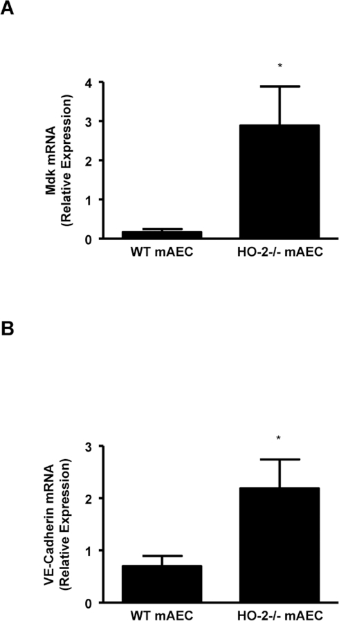 Real-time PCR analysis of mRNA expression of (A) midkine (Mdk) and (B) VE-Cadherin in untreated aortic endothelial cells (mAEC) from WT and HO-2−/−.Results are the mean ± SE; n = 4 to 5; *p<0.005 from WT mAEC.