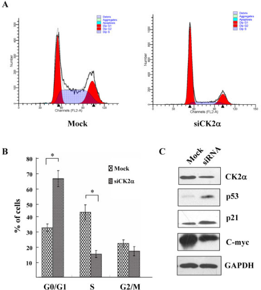 ck2α inhibition induced g0 g1 phase arrest a lovo c open i