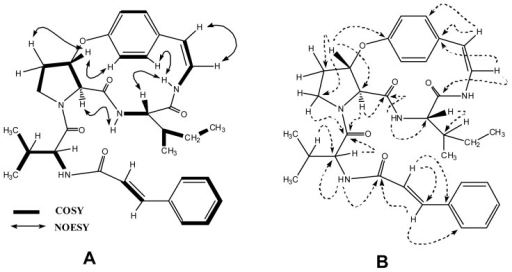 (A) Key COSY and NOESY interactions in oxyphylline B (4); (B) Key HMBC interactions in oxyphylline B (4).