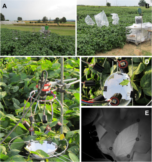 Setup used in the field. (A) Overview of the soybean field and setup; (B) Setup wrapped in plastic bags due to rain (measurement stopped); (C) Close-up view of the setup with infrared camera on top, infrared diodes and a soybean leaf fixed with strings glued to the leaf with attached weights; (D) Close-up view of the fixed soybean leaf with attached black beads; (E) Original image of a soybean leaf in the field taken with an infrared camera.