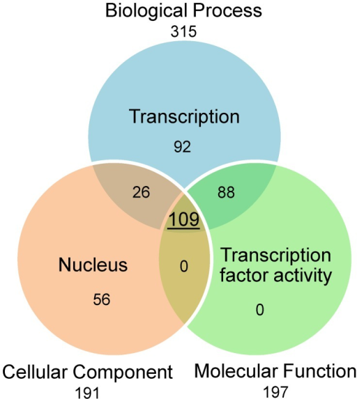 "Gene Ontology annotation of putative transcription factors.This Venn diagram represents the number of proteins that cumulate transcription-related terms in their Gene Ontology annotation in protein set 1. A total of 315 proteins have been assigned the term 'Transcription' in their Biological Process G.O. annotation. A total of 191 proteins have been assigned the term 'Nucleus' in their Cellular Component G.O. annotation. A total of 197 proteins have been assigned the term 'Transcription factor activity"" in their Molecular Function G.O. annotation. Overall, a total of 109 proteins in set 1 cumulate these three transcription factor-related G.O. terms."