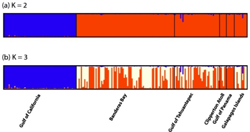 Structure plot of S. glynni populations from the tropical and subtropical eastern Pacific.Structure plot of S. glynni populations based on allelic frequencies at 11 microsatellite loci. Each bar in the graph represents the probability that a sample belongs to a particular color-coded population. Each graph represents analyses for a particular number of populations (K) run under an admixture with a correlated allele frequency model. (a) Major differentiation occurred between the Gulf of California population and populations in the ETP (k = 2). (b) Additional clustering occurred in the ETP, yet did not correspond to location, depth or host morphospecies (k = 3).