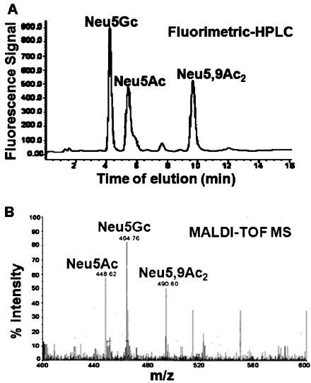 Identification of sialic acids of Pseudomonas aeruginosa (PA) by analytical methods. (A)Fluorimetric-HPLC of 1,2-diamino-4,5-methyleneoxybenzene (DMB) derivatized sialic acids. A representative fluorimetric reverse phase HPLC profile of DMB derivatized sialic acids purified from PA. Three intense peaks were observed corresponding to Neu5Ac, Neu5Gc and Neu5,9Ac2. Reproduced with permission from John Wiley and Sons, Oxford, UK (FEBS Lett2010; 584: 555-61). B. MALDI-TOF-MS spectra of the total sialic acids from PA. Sialic acids were purified from PA+Sias and derivatized with 1,2-diamino-4,5-methyleneoxybenzene (DMB). These were analyzed by MALDI-TOF MS on a target with an equal volume of matrix (2,5-dihydroxybenzoic acid). All mass spectra were recorded in the positive ion mode. Sodium cationized molecular ions of Neu5Ac, Neu5Gc and Neu5,9Ac2 peaks having m/z at 448.7, 464.8 and 490.6, respectively are shown. Reproduced with permission from John Wiley and Sons, Oxford, UK (FEBS Lett 2010; 584: 555-61).