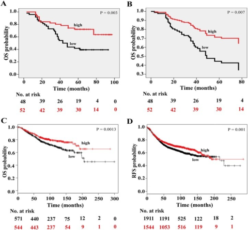 Low C10orf10 expression is correlated with shorter survival in BC patients.(A) Survival analysis of C10orf10 protein expression in 100 BC patients by Kaplan-Meier survival curve. Tissue array analysis was performed in 100 cases of patients with the survival information. The patients with low expression had a poorer overall survival than those with high expression; HR, hazard ratio; low, staining negative and weak; high, staining moderate and strong. (B) Survival analysis of C10orf10 expression in 100 BC patients by multivariate Cox regression. The C10orf10 expression is an independent prognostic factor. (C) Kaplan-Meir survival analysis of C10orf10 mRNA in 1115 BC patients with Kaplan-Meier Plotter (http://kmplot.com/analysis/index). The overall survival was longer in the C10orf10 high expression group than in the C10orf10 low expression group. Auto select best cutoff was chosen in the analysis; Cutoff value used was 1086; Expression range of the probe was 143–3881. (D) Kaplan-Meir survival analysis of C10orf10 mRNA in 3455 BC patients with Kaplan-Meier Plotter. The relapse-free survival was longer in the C10orf10 high expression group than in the C10orf10 low expression group. Auto select best cutoff was chosen in the analysis; Cutoff value used was 1088; Expression range of the probe was 32–5515.