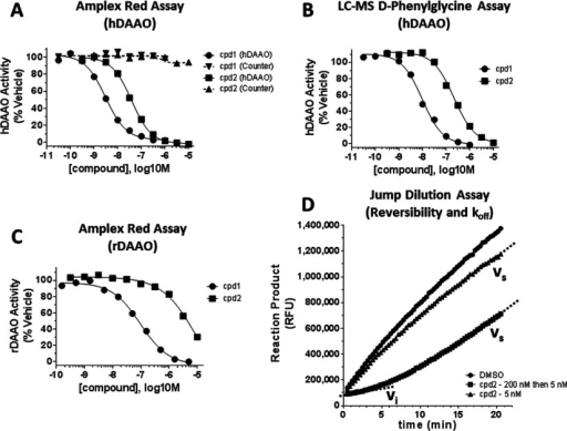 Profiling compounds in enzymatic inhibitory assays(A) In the Amplex Red platform, compound (cpd) 1 and cpd 2 were tested for hDAAO inhibition with D-serine as substrate (solid lines) and counter assay inhibition (dashed lines). Neither compound produced any inhibition in the counter assay. (B) Cpd 1 and cpd 2 inhibited hDAAO in the hDAAO inhibition assay with D-phenylglycine as substrate and using LC–MS for direct product detection. (C) Cpd 1 and cpd 2 inhibited rDAAO, albeit less potently than they inhibited hDAAO. (D) Jump-dilution assay example data for cpd 2. In the Amplex Red platform, activity of hDAAO was monitored kinetically as production of fluorescent product over time. In the 'koff' condition (squares; '200 nM then 5 nM'), 200 nM cpd 2 (an inhibitory concentration; see Figure 2A) was rapidly diluted to 5 nM (a non-inhibitory concentration). Initially hDAAO was inhibited as reported by a shallow slope of product production defined as low initial velocity (vi). Over time, inhibitor dissociates and a more rapid, steady-state velocity of product production (vs) was observed. Quantitative data from each of these assays are presented in Table 1.