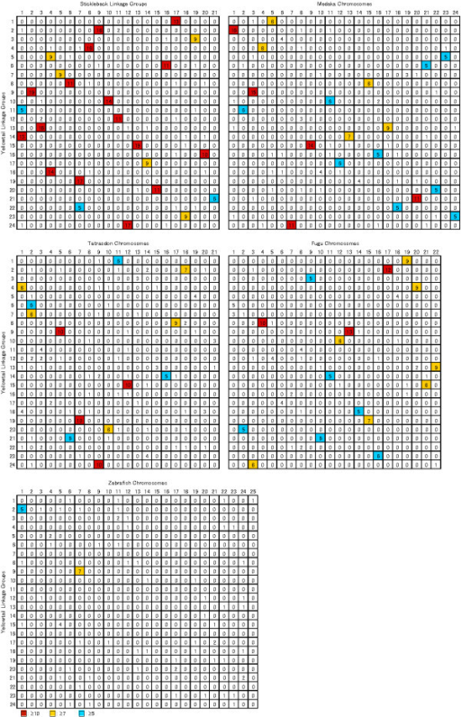 Oxford grids between yellowtail and five model fish genomes. Numbers in boxes indicate the number of orthologous gene pairs. Boxes containing more than ten, seven and five orthologous gene pairs are highlighted in red, yellow and blue respectively.