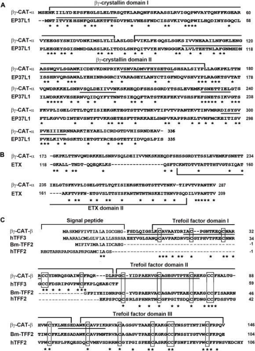 Sequence comparison of βγ-CAT α- and β-subunits.(A) Sequence comparison of βγ-CAT α-subunit with EP37L1 from newt C. pyrrhogaster [2]. The characteristic βγ-crystallin domains were marked. (B) Sequence comparison of βγ-CAT α-subunit C-terminal part (residues 173–287) with an internal fragment (residues 118–209) of ETX from bacterial C. perfringens [21]. (C) Sequence comparison of βγ-CAT β-subunit with human TFF3 [22], Bm-TFF2 [12] and human TFF2 [23]. The characteristic cysteine residues of TFF domains are boxed. In (A) and (C), Peptides corresponding to determined amino acid sequences by Edman degradation are underlined. In (A), (B) and (C), identical residues are shown by asterisks. Gaps have been introduced to optimize the sequence homology.