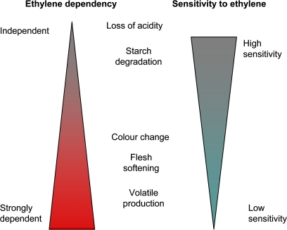 Conceptual model for control of individual ripening characters in apples. Ethylene sensitivity calculated from the concentration of ethylene required for a 50% ripening response. Ethylene dependency measured by the amount of ripening measured in the absence of ethylene. (This figure is available in colour at JXB online.)