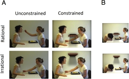 Snapshots of the feeding action; bringing food to the recipients hand/mouth.(A). Snapshots of the recipient leaning forward to eat off the back of her hand (B) in the irrational and constrained condition (upper) and the rational and constrained condition (lower).