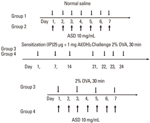 Allergic mouse model. After intraperitoneal injection of a mixture of 25 µg OVA and 1 mg Al(OH)3 gel, mice were nebulized with 2% OVA for 4 days. Mice were then stimulated with continuous 2% OVA alone (OVA group) or a mixture of 2% OVA and ASD (OVA+ASD group).IP, intraperitoneal; ASD, Asian sand dust; OVA, ovalbumin.
