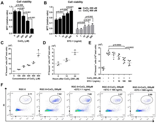 STC-1 inhibited apoptosis of RGC-5 cells exposed to CoCl2.(A) MTT assay showed that exposure to CoCl2 for 12 h decreased the viability of RGC-cells in a concentration-dependent manner. (B) STC-1 treatment significantly rescued RGC-5 cells that were injured by either 200 μM or 400 μM CoCl2 in a dose-dependent manner. (C, D) Flow cytometry showed that CoCl2 increased the numbers of PI+Annexin+ cells in RGC-5 cells in concentration- and time-dependent manners. (E, F) Both 100 and 500 ng/mL of STC-1 decreased the numbers of PI+Annexin+ cells in RGC-5 cells injured by 200 μM CoCl2. The values are presented as the mean ± SEM.