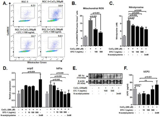 STC-1 inhibited ROS levels in RGC-5 cells exposed to CoCl2.(A, B) Flow cytometry showed that CoCl2 significantly increased the percentage of cells positive for both CellROXTM and MitoTracker Green, a marker for oxidative stress, and treatment with either 100 or 500 ng/mL of STC-1 significantly decreased the percentages of CellROX+ MitoTracker Green+ cells in RGC-5 cells. (C) ELISA analysis for nitrotyrosine indicated that levels of nitrotyrosine were markedly increased in CoCl2-injured RGC-5 cells, and significantly decreased by STC-1 or N-acetylcysteine treatment. (D) Real time RT-PCR analysis indicated that expression of HIF-1α was induced in RGC-5 cells by CoCl2, and was significantly down-regulated by STC-1 (100 or 500 ng/mL). However, UCP2 transcripts were not increased by STC-1. (E) Western blot analysis for HIF-1α showed that HIF-1α protein was increased in RGC-5 cells after CoCl2 injury, and was decreased by STC-1 treatment. (F) ELISA showed that the levels of UCP2 protein were not increased in CoCl2-injured RGC-5 cells by STC-1 treatment, whereas N-acetylcysteine treatment significantly increased levels of UCP2. The values are presented as the mean ± SEM.