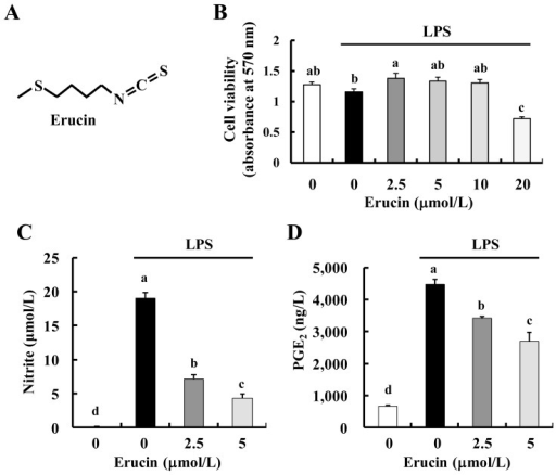 Erucin decreases lipopolysaccharide (LPS)-induced NO and prostaglandin E2 (PGE2) production in RAW 264.7 cells. (A) Structure of erucin; (B–D) RAW 264.7 cells were treated with various concentrations of erucin in the presence of LPS. Viable cell numbers were estimated by the MTT Assay (B); The 24-h-conditioned media were collected for the estimation of NO (C) and PGE2 (D) concentrations. Each bar represents the mean ± SEM (n = 4). Means without a common letter differ (p < 0.05).