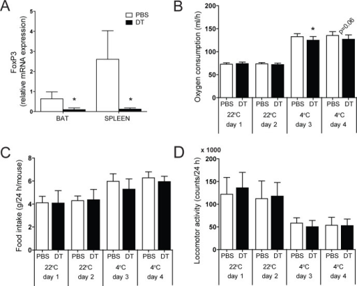 Treg cell depletion and metabolic phenotyping.(A) Real-time RT-PCR analysis of FoxP3 expression in brown adipose tissue (BAT) and spleen in Treg cell-proficient (PBS) and Treg cell-deficient (DT) mice. (B) Oxygen consumption, (C) food intake and (D) locomotor activity during 4 consecutive days at 22°C and 4°C. Injections of vehicle (PBS) or diphtheria toxin (DT) were performed at day 2 and day 3. Values are mean ± SD (n = 9–10); *P<0.05 (Student's t-test).
