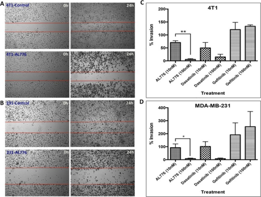 Anti-motility and anti-invasive properties of AL776 in 4T1 mousemammary tumour and MDA-MB-231 triple negative breast cancer celllines.(A) 4T1 and (B) MDA-MB-231 cells were treatedwith 100 nM of AL776 or control drugs gefitinib or dasatinib for aperiod of 24h and the wound-closure (scratch) was monitored at both 0hand 24h time points. (C) 4T1 or (D) MDA-MB-231cells were treated with varying doses of AL776 (in comparison withdasatinib or gefitinib) for a period of 24h in a Boyden Chamber invasionassay. Cells were plated in serum-free media (top chamber) and allowedto invade across the layer of matrigel towards media containing 10% FBS(bottom chamber) through chemotaxis. Drugs were added to both the topand bottom chambers to maintain a uniform distribution. Cells werefixed, stained and quantified to generate the percentage of invadingcells across the matrigel in comparison with untreated control cells.The histograms represent the average ± SEM of three independentexperiments. Statistical analysis was performed using the unpairedtwo-tailed t-test and p values were obtained (p < 0.05 issignificant): 4T1 ** (p = 0.001), MDA-MB-231 * (p< 0.05).