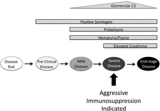 Treatment paradigm for lupus nephritis.Ideally, aggressive immunosuppression is reserved for those with severe renal disease. Lupus nephritis is associated with the presence of serologic changes, proteinuria, hematuria, and elevated serum creatinine levels. Unfortunately, these changes are not accurate for identifying patients with severe disease that is amenable to treatment. The abundance of glomerular C3 deposits increases with disease severity but falls off in end stage disease80, raising the possibility that non-invasive detection of glomerular C3 will be useful for guiding treatment of patients with lupus nephritis.