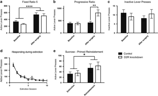 Sucrose self-administration under FR and PR schedules of reinforcement, extinction, and reinstatement. (a) FR5 responding (1 h session) was increased after surgery with no difference between D2R knockdown and controls. (b) PR responding (average of six sessions) approximately doubled in D2R knockdown animals after surgery whereas PR responding in control animals was unaltered. (c) D2R knockdown and control animals made a comparable, minimal amount of inactive lever presses during PR sessions. There was no difference between experimental groups. (d) Rats were exposed to 10 (1 h) extinction sessions, in which active lever presses were not reinforced. Extinction of responding occurred in a comparable manner in D2R knockdown and control animals. (e) The non-contingent delivery of three sucrose pellets induced significant reinstatement of sucrose seeking in both groups. 'Extinction' represents the number of active lever presses in extinction session 10. Data are presented as means+SEM *p<0.05, **p<0.01, ****p<0.0001.