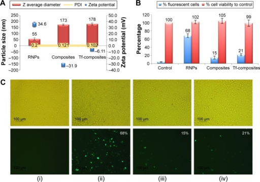 In vitro transfection of ZR-75-1 cell lines with PLA25-PEG5 composite nanoparticles and transferrin-modified PLA25-PEG5 composite nanoparticles (Tf-composites).Notes: (A) Particle size and zeta potential characterization of RNPs, composite nanoparticles, and Tf-composite nanoparticles; (B) percent cell viability after treatment of the ZR-75-1 cells with nanoparticles; (C) transfection efficiency by flow cytometry and fluorescent microscopy: (i) DNA only; (ii) RNPs; (iii) composite nanoparticles; and (iv) Tf-composites. The top row depicts the bright field images, and the bottom row shows the same samples under fluorescence. Magnification was ×100. The numbers on the images indicate the percentage of cells expressing the GFP determined by flow cytometry.Abbreviations: PLA, polylactic acid; PEG, polyethylene glycol; RNPs, RALA nanoparticles; GFP, green fluorescent protein; PDI, polydispersity index.