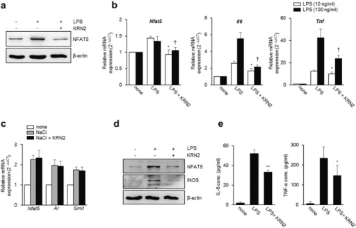 KRN2 inhibits the expression of NFAT5 and its target ge | Open-i