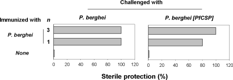 Sterile protection in mice immunized with P. berghei irradiated sporozoites and challenged with P. berghei or P. berghei [PfCS] sporozoites.Mice were immunized with 1 or 3 injections of P. berghei (indicated on the left of the panel) before challenge with 5 000 P. berghei or P. berghei [PfCS] sporozoites. All naive control mice developed a patent blood-stage infection. The data are representative of those obtained in duplicate experiments.