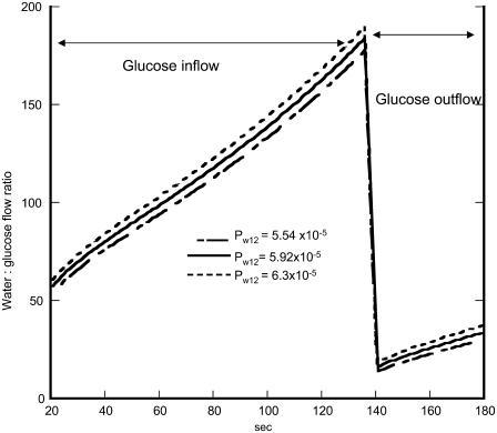Simulation of the changes in the molar ratio of water/3-OMG inflow via Glut2. The lines shown indicate the effects of changing the parameter values of the transporter Pw12 on inflow phase 1 and outflow phase 2 with varying values of the hydraulic permeability.