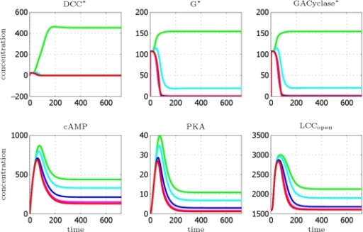 DCC model: concentration profiles as a function of time (in minutes), integration till T = 12 h.Curves are relative to the four most representative angular sectors, perceiving a cue concentration ranging from minimal to maximal value, respectively. Legend: green [Netrin] = 9.52 nM (max value), cyan [Netrin] = 9.36 nM, blue [Netrin] = 9.16 nM, magenta [Netrin] = 9.08 nM, red [Netrin] = 9.07 nM (min value).
