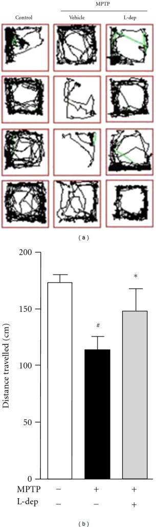 MPTP induces deficit of swimming behavior in zebrafish. (a) Typical swimming patterns of control and MPTP-treated zebrafish. Lines show the track of zebrafish movement. Zebrafish treated with MPTP was less active as compared to the control. (b) Quantitative analysis of total distance travelled. #P < 0.05 compared with untreated control. *P < 0.05 compared with MPTP treated alone.