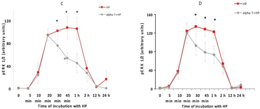 The figure shows the effect of hydrogen peroxide and pre-incubation with α-T on the activity (pERK 1/2 level) and expression of ERK 1/2 in PC12 cells. PC12 cells were pre-incubated with 100 nM and 100 μM α-T (or without it) for 18 h and then exposed to 0.3 mM H2O2. The results of immunoblotting obtained in one typical experiment (from five experiments made) are shown in (A,B), (A) 100 nM α-T; (B) 100 μM α-T. The results of five experiments are shown in (C,D) as means ± SEM; (C) 100 nM α-T; (D) 100 μM α-T. Red lines with square data points show effect of H2O2 alone, black lines with diamond data points show the effect of H2O2 after pre-incubation with α-T. In (C,D): HP is an abbreviation for hydrogen peroxide. alpha-T is an abbreviation for α-tocopherol * the differences are significant according to Students' paired t test, as compared to the level of pERK 1/2 in the PC12 cells exposed to α-T and H2O2, p < 0.05.