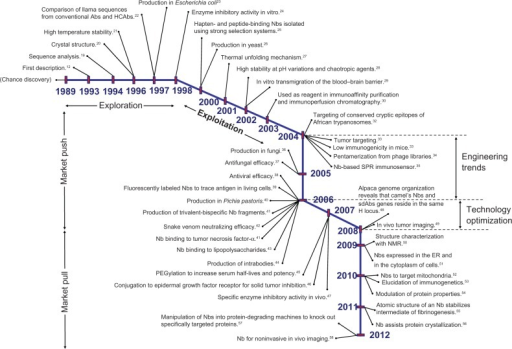 The scientific roadmap of university-derived advancements in Camelidae HCAbs.Notes: Since their discovery in 1989, research groups moved fast to integrate Nbs in the well-established scientific frame of Ab-based biomedical tools. Although a clear distinction between the exploration and the exploitation phase cannot be made, and since even the latest papers are, to some extent, concerned with elucidation of mechanisms and physical chemistry, while the applicability domain was clearly defined in the introductory paper of 1993, a turning point can be found around 1998. As the spinoff, Ablynx, was moving to patenting and clinical testing at the early 2000s, the academic research groups were feeding a knowledge push mechanism until 2008, offering relations between properties and potential (until 2004), engineering trends (until 2006) and technology optimizations (until 2008). More researchers were attracted to join and extend the scientific network. Thereafter, the transition to a market pull mechanism becomes apparent, justifying Nbs as viable alternatives to Ab fragments, while a clear therapeutic advantage remains to be clinically proven. Superscripted numbers refer to published papers that document either a Nb asset or a stated intended use.Abbreviations: Ab, antibody; HC, heavy chain; Nb, nanobody; SPR, surface plasmon resonance; PEGylation, polyethylene glycol treatment; H, heavy; sd, single-domain; NMR, nuclear magnetic resonance; ER, endoplasmic reticulum.