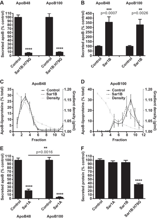 Sar1A and Sar1B have opposite effects on apoB48- and apoB100-containing lipoprotein secretion.A and B, McArdle-RH7777 cells were labeled with l-[35S]methionine for 60 min and chased for 120 min. The l-35S-labeled apoB in the cell media was immunoprecipitated, analyzed by SDS-PAGE, and visualized by phosphorimaging. Data (mean ± S.E.) are from four independent experiments.****, p < 0.0001 versus cells with empty vector control. ***, p < 0.001 versus cells with empty vector control. **, p < 0.01 versus cells with empty vector control. C and D, densities of fractions containing secreted l-35S-labeled apoB48-containing (C) and l-35S-labeled apoB100-containing (D) lipoproteins were determined gravimetrically. Data (mean ± S.E.) are from three independent experiments. E, secreted l-35S-labeled apoB from two independent Sar1A-FLAG cell lines, quantified as in A and B. ****, p < 0.0001 versus cells with empty vector control. **, p < 0.01 versus apoB100 lipoproteins. F, total l-[35S]methionine in secreted protein fraction. Data (mean ± S.E.) are from five independent experiments. ****, p < 0.0001 versus cells with empty vector control.