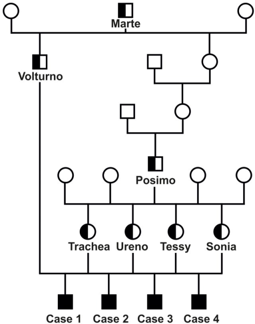 Family Tree Showing Four Romagnola Calves Affected By C Open I