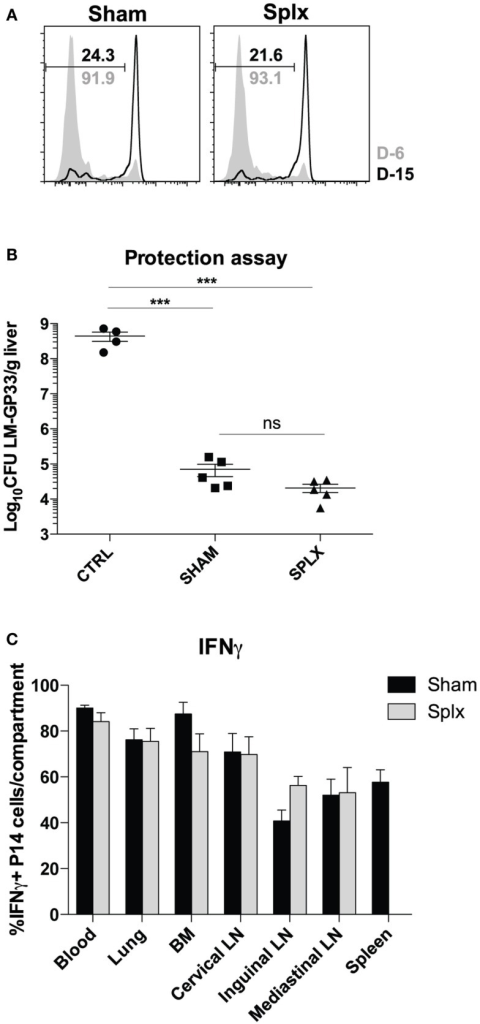 Protective capacity of memory CD8 T-cells unaltered in the absence of spleen. Sham and splx-treated mice were infected i.p. with 2 × 105 PFU LCMV-Armstrong on D-6 and D-15. Naïve P14 CD8 T-cells were labeled with CFSE and adoptively transferred into infected mice at D0 (2 × 106/mouse). Inguinal lymph nodes were harvested 3 days post-transfer and analyzed for CFSE dilution. (A) CFSE dilution of P14 cells from inguinal lymph nodes. (B) Naïve B6 mice and memory P14 sham and splx-treated mice were challenged with 1 × 106 CFU virulent LM-gp33 (XFL203) intravenously. Bacterial burden in the liver was assessed on D3 post-challenge. (C) Frequency of IFNγ positive P14 cells in sham and splx mice. Data are represented as mean ± S.D. with five or more mice per group. ***p < 0.0005.