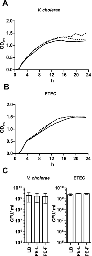 C. procera plant extracts do not affect growth or viability of V. cholerae and ETEC. Shown are the growth kinetics of V. cholerae (A) and ETEC (B) in LB broth with leaf (dashed line) or fruit extracts (dotted line). LB broth alone served as control condition (solid line). Shown are the medians from at least six independent measurements. (C) At 24 h the CFU/ml was determined by plating appropriate dilutions on LB plates. Data represent mean ± standard deviation (SD) of at least three independent measurements.