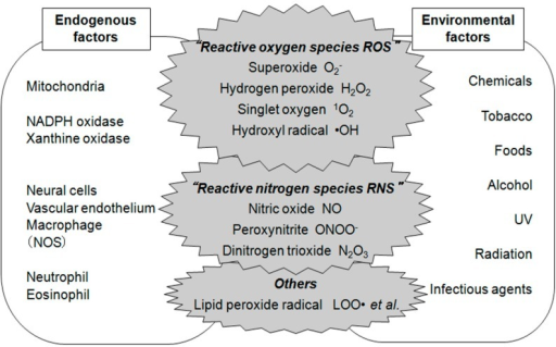 Reactive oxygen species and reactive nitrogen species (ROS and RNS) and their sources from endogenous and environmental factors.