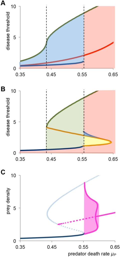 Dynamics for varying disease invasion threshold.Plotting dynamics as a function of predator death rate μP, and disease invasion threshold (μJ+α)/β. (a) Dynamics for the case of δ = 1. In the white area the disease cannot invade, and in the pink area there is a single endemic equilibrium. The blue area indicates bistability between a stunted endemic state and a non-stunted disease free state. The red line denotes predator extinction. The green and blue line are thresholds below which the disease can invade respectively, the stunted and non-stunted host population. The dashed black lines indicate the disease free region of bistability (b) Dynamics for the case of δ = 0. In the green area only the disease free non-stunted state is stable. The yellow area indicates stable recurrent epidemics, and in the purple area there is bistability of recurrent epidemics and an endemic state. The orange line is a Hopf bifurcation, either supercritical (solid line) or subcritical (dashed line). Other lines and areas are as described in Fig 4a (c) Bifurcation diagram for the subcritical Hopf bifurcation for β = 0.06. The bifurcation resembles that of Fig 3c, but now there is a region of bistability between an endemic state and a stable limit cycle for 0.588 < μP < 0.595. The red area denotes the amplitude of the stable limit cycle, and the dashed red line shows the minimum and maximum of the unstable limit cycle. For parameters see Fig 3.