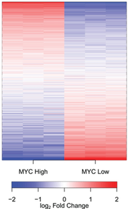 MYC regulates the expression of noncoding (nc) RNAsA heatmap of ncRNAs detected in the human B cell line P493–6. P493–6 cells were analyzed by RNAseq in triplicate under conditions of high and low MYC expression. Transcripts are ordered by the change in expression upon MYC upregulation, with those most upregulated at the top and those most downregulated at the bottom. The figure shows that the expression of virtually all ncRNAs is affected by MYC; they are either upregulated or downregulated. There extremely few if any noncoding transcripts that do not respond to MYC.